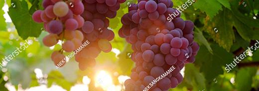 Di Simo Autotrasporti trasporto vino